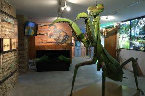 INSECTPARK, EL MUSEO DE LOS INSECTOS